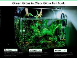 Green Grass In Clear Glass Fish Tank