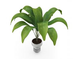 Green Indoor Plant Stock Photo
