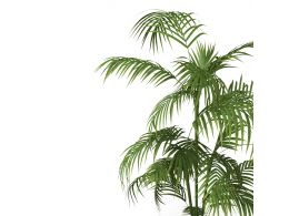 Green Indoor Plant With White Background Stock Photo