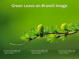Green Leave On Branch Image