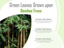 Green Leaves Grown Upon Bamboo Trees