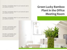 Green Lucky Bamboo Plant In The Office Meeting Room