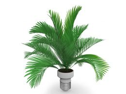 green_plant_stock_photo_Slide01