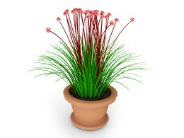 Green Red Plant Pot Stock Photo