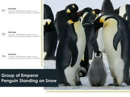 Group Of Emperor Penguin Standing On Snow