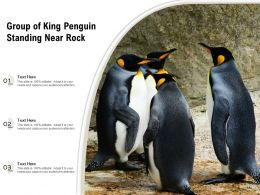 Group Of King Penguin Standing Near Rock