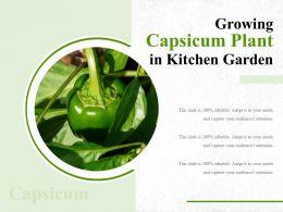 Growing Capsicum Plant In Kitchen Garden