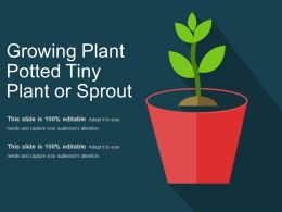 Growing Plant Potted Tiny Plant Or Sprout