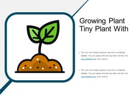 Growing Plant Tiny Plant With