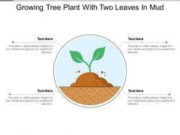 Growing Tree Plant With Two Leaves In Mud