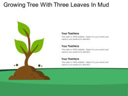 Growing Tree With Three Leaves In Mud