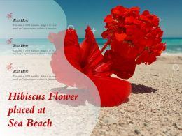 Hibiscus Flower Placed At Sea Beach