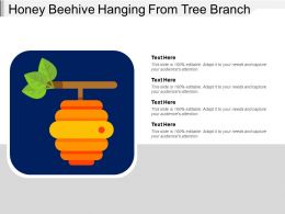 Honey Beehive Hanging From Tree Branch
