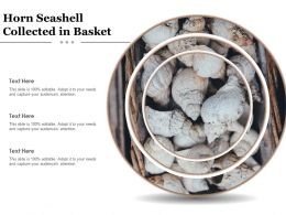 Horn Seashell Collected In Basket
