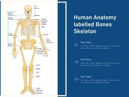 Human Anatomy Labelled Bones Skeleton