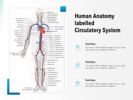 Human Anatomy Labelled Circulatory System