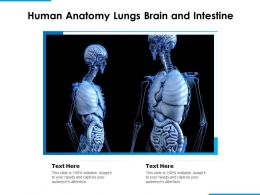 Human Anatomy Lungs Brain And Intestine
