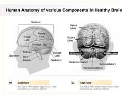 Human Anatomy Of Various Components In Healthy Brain