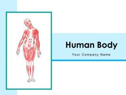 Human Body Anatomical Structure System Description Internal