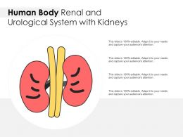 Human Body Renal And Urological System With Kidneys