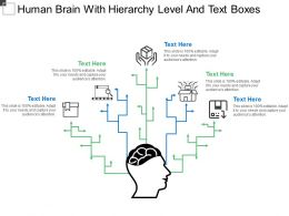 Human Brain With Hierarchy Level And Text Boxes
