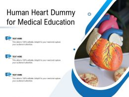Human Heart Dummy For Medical Education