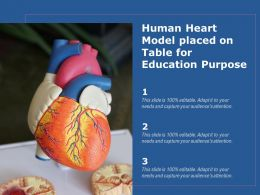 Human Heart Model Placed On Table For Education Purpose
