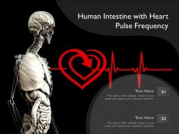 Human Intestine With Heart Pulse Frequency