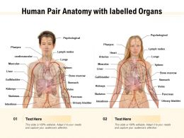 Human Pair Anatomy With Labelled Organs