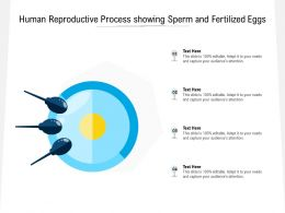 Human Reproductive Process Showing Sperm And Fertilized Eggs