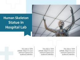 Human Skeleton Statue In Hospital Lab