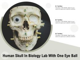 Human Skull In Biology Lab With One Eye Ball