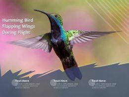 Humming Bird Flapping Wings During Flight