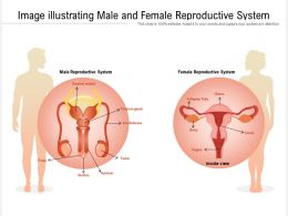 Image Illustrating Male And Female Reproductive System