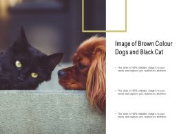 Image Of Brown Colour Dogs And Black Cat
