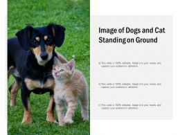 Image Of Dogs And Cat Standing On Ground