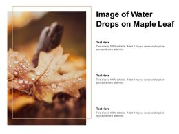 Image Of Water Drops On Maple Leaf