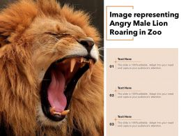 Image Representing Angry Male Lion Roaring In Zoo