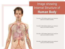 Image Showing Internal Structure Of Human Body
