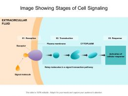 Image Showing Stages Of Cell Signaling