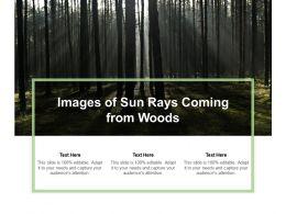 Images Of Sun Rays Coming From Woods