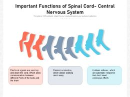 Important Functions Of Spinal Cord Central Nervous System