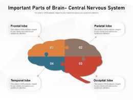 Important Parts Of Brain Central Nervous System