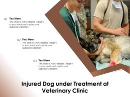 Injured Dog Under Treatment At Veterinary Clinic