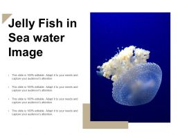 Jelly Fish In Sea Water Image
