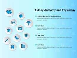 Kidney Anatomy And Physiology Ppt Powerpoint Presentation Layouts Example