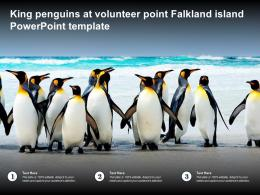 King Penguins At Volunteer Point Falkland Island Powerpoint Template