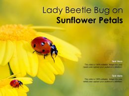 Lady Beetle Bug On Sunflower Petals