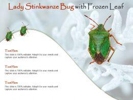 Lady Stinkwanze Bug With Frozen Leaf