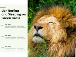 Lion Resting And Sleeping On Green Grass